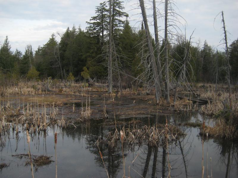 Ugly looking swamps off of the Northwestern