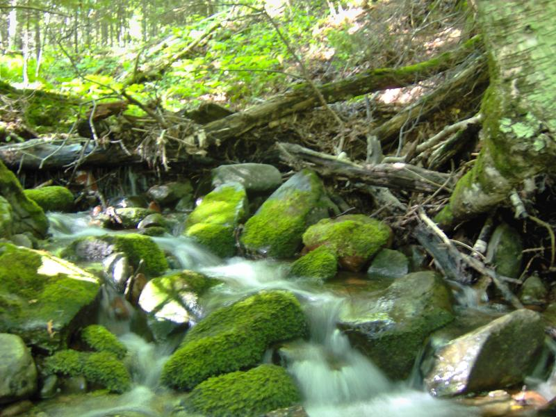 Tiny green cascades along the creek