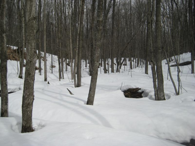 Deep snow left in the woods