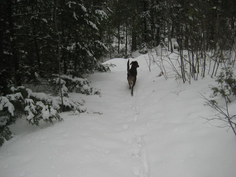 Proud Logan marching high on the snow