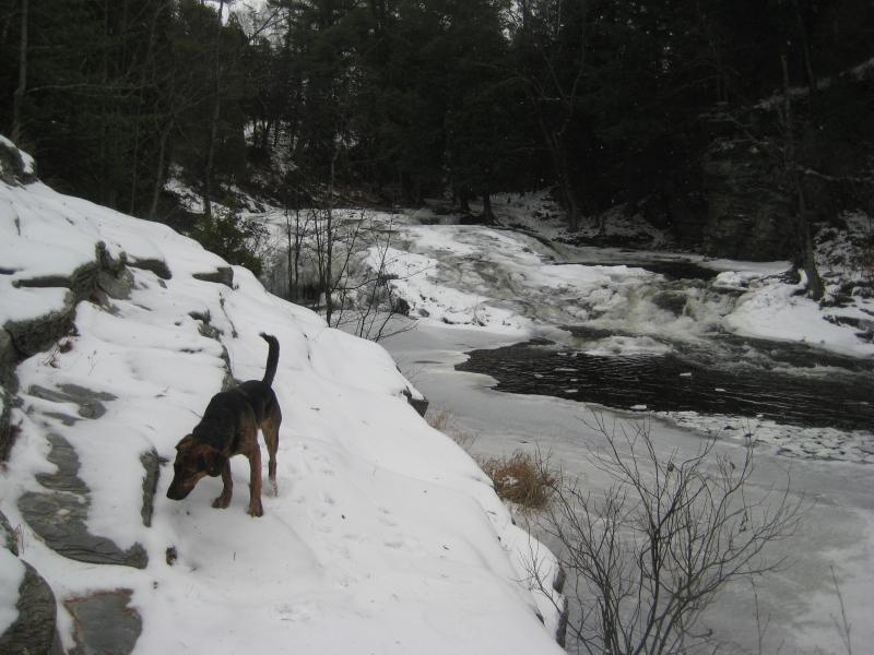 Logan ignoring the falls for quick sniff