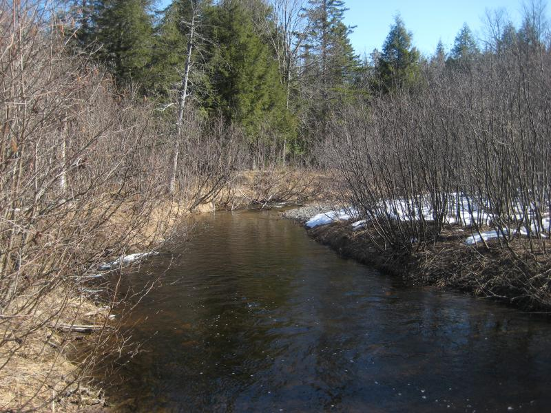 Barren swampy section of the river