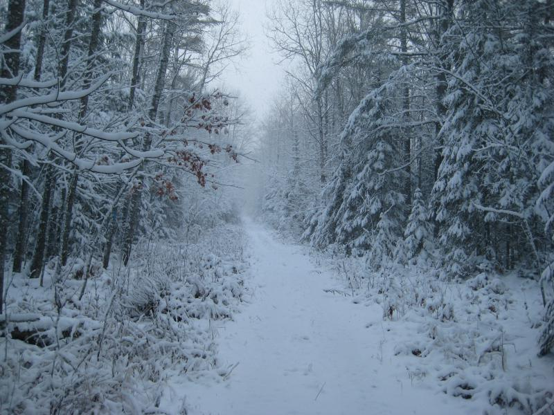 Winter draped over the trail