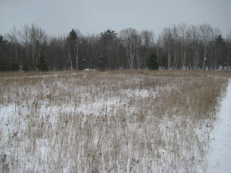 An open, snowy meadow