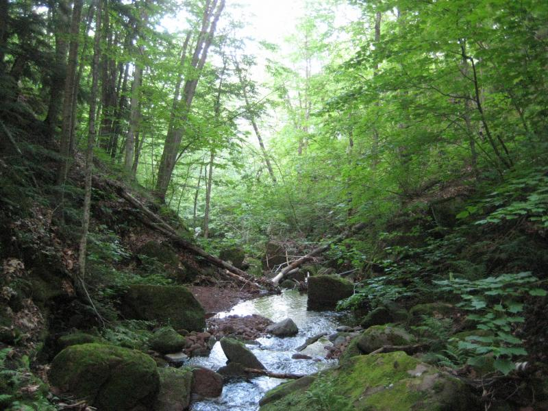 A lush, green creek gorge