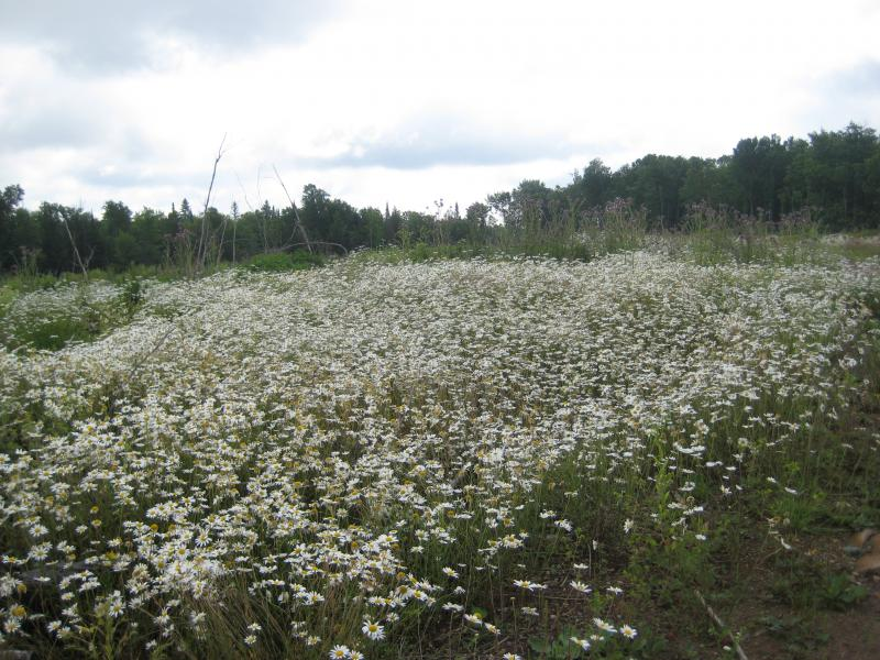 Flowers along the clear cut land