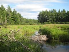 Lush grass clogging up West Branch headwaters